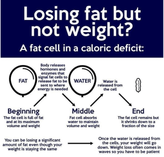 Losing Fat But Not Weight?